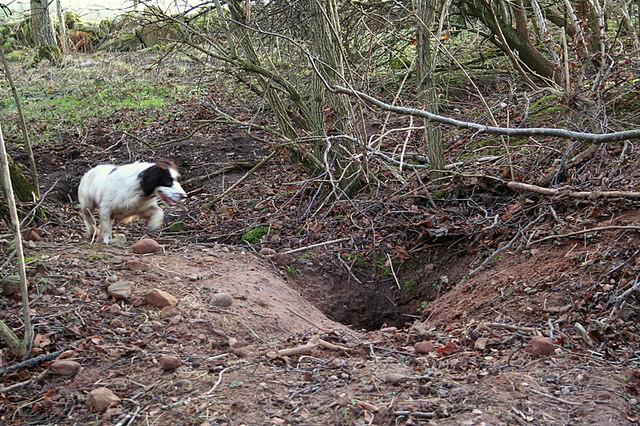 Happening upon a badger sett by  Boghole Farm.