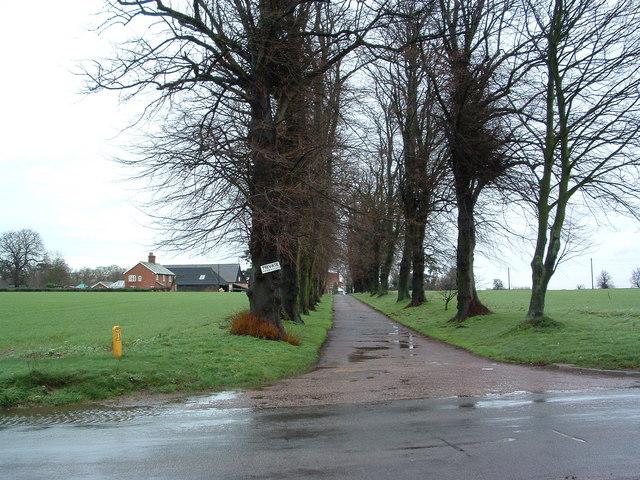 Tree Lined Farm Road