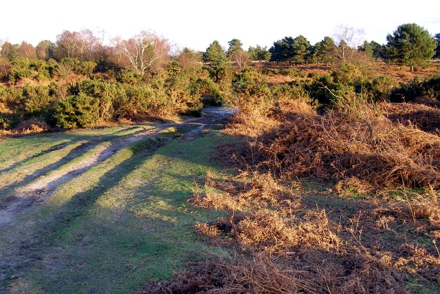Rutted path on Rockford Common, New Forest