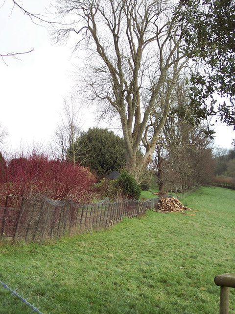 Logs by Bridleway to Ebbesbourne Wake