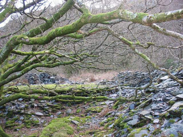 Sessile oak, moss and slate