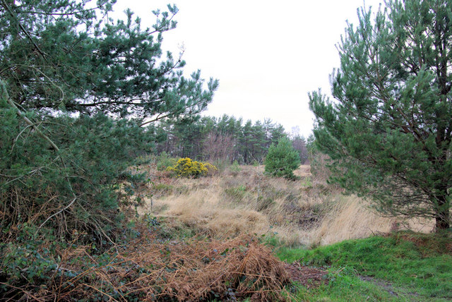 Ashdown Forest near Churlwood Car Park (A)