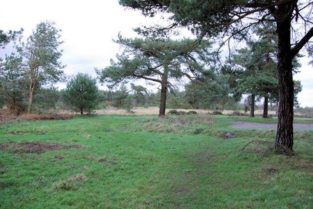 Ashdown Forest near Churlwood Car Park (B)