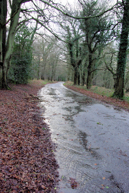 A wet and windy day, Ashdown Forest.