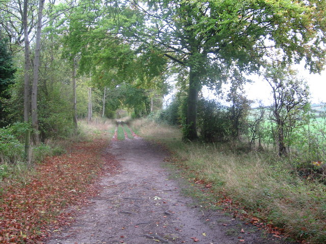 Icknield Way near Tingley Wood
