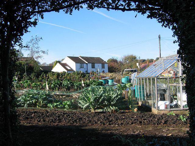 Vegetable patch, Woolley Moor