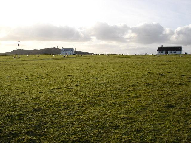 Sheep grazing machair