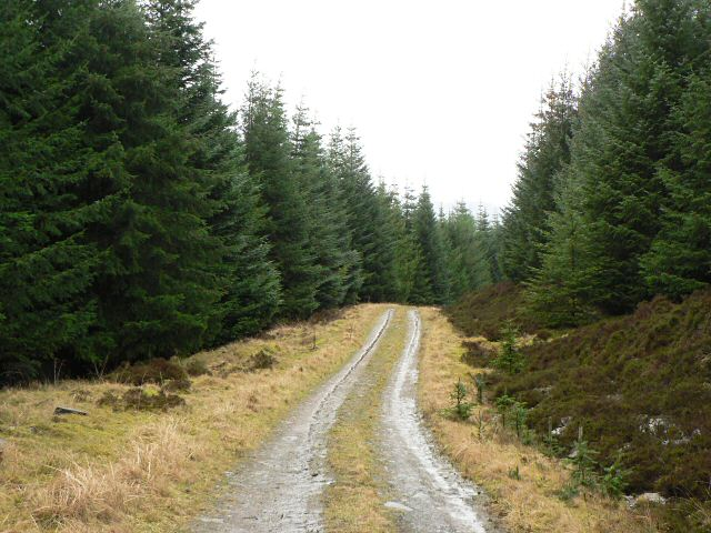 Track in Griffin Forest