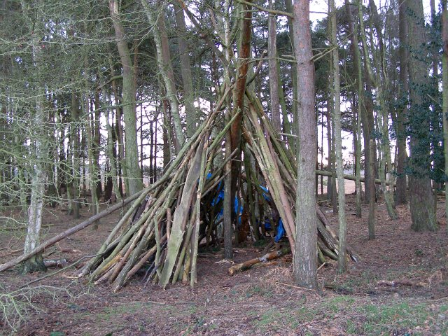 Temporary shelter in Whitefield Plantation, Ibsley Common, New Forest
