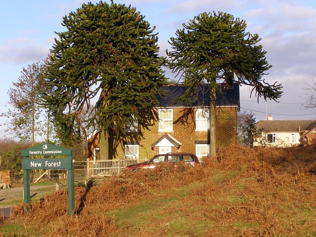 Monkey puzzle cottage, near Linwood, New Forest