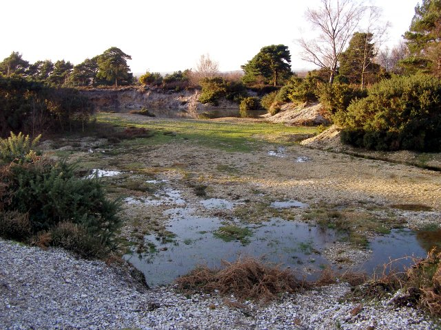 Disused gravel pit near Paddy Bussey's Firs, Rockford Common, New Forest