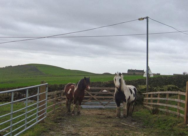 Horses on bridleway