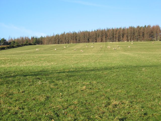 Field at Muckernich