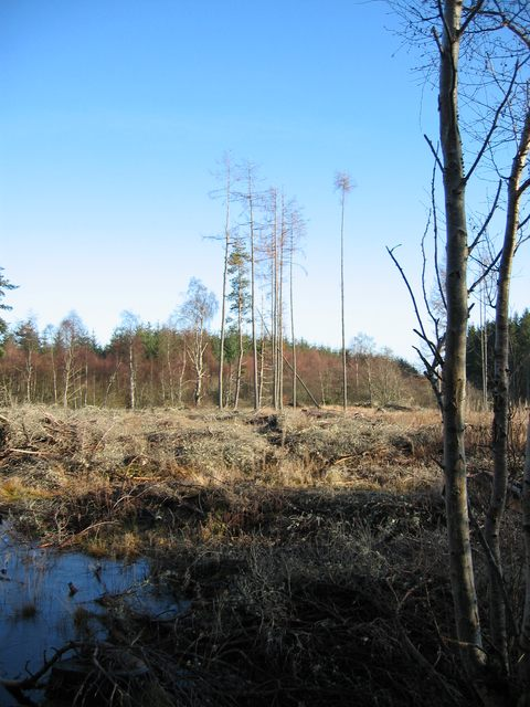 Forestry at Broomhill