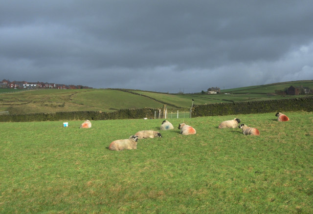 Sheep Pasture, Strine Dale