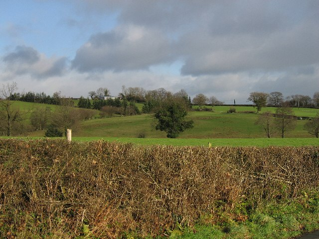 Hedge, Field And Trees