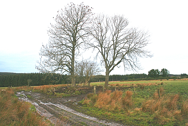 Clump of Trees