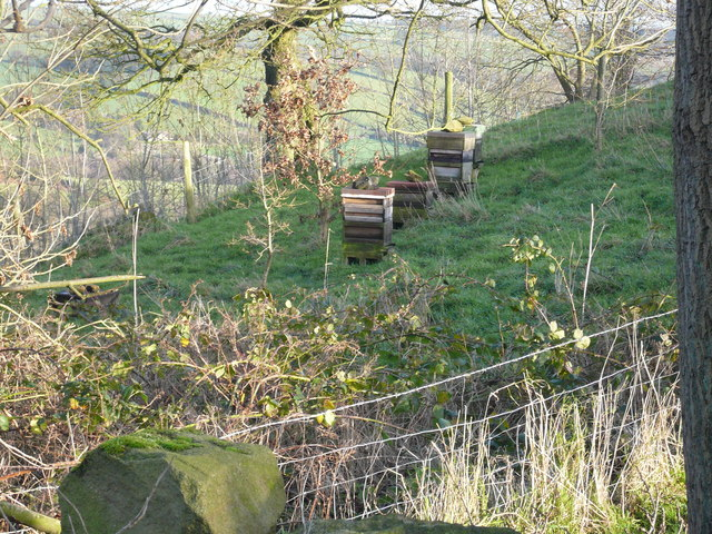 Bee Hives at Robridding