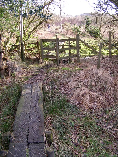 Walkway through marshy ground, near Appleslade, New Forest