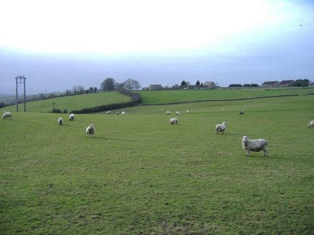 Sheep pasture at Fuddlebrook Hill