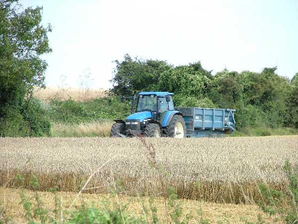 Farmland at Wakering Common