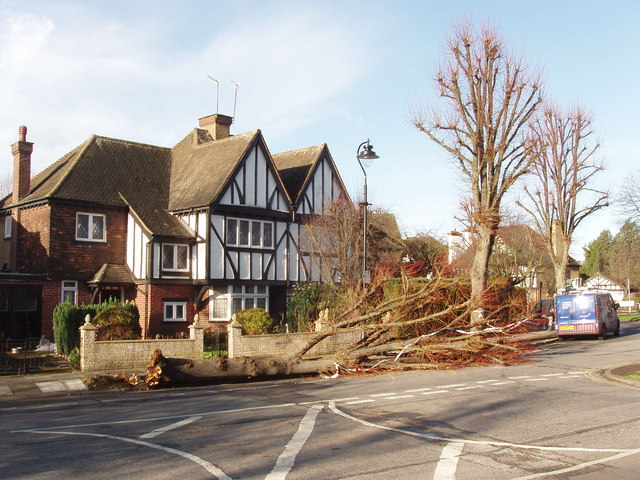 Tree felled by storm, West Acton