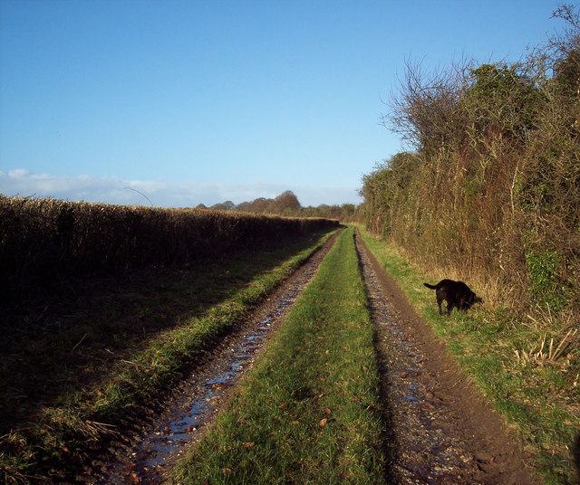 Bridleway to the Old Shaston Drove
