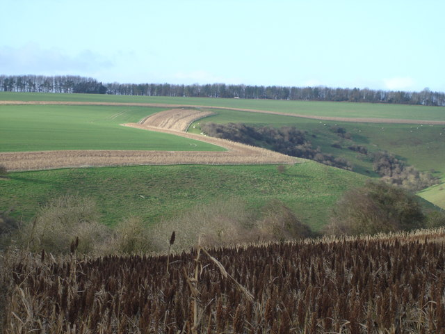 Across Rotherley Bottom