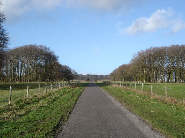 Magnificent avenue leading to Cuttice Lodge