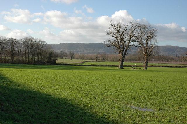 Farmland by Chestnut Coppice, Byford