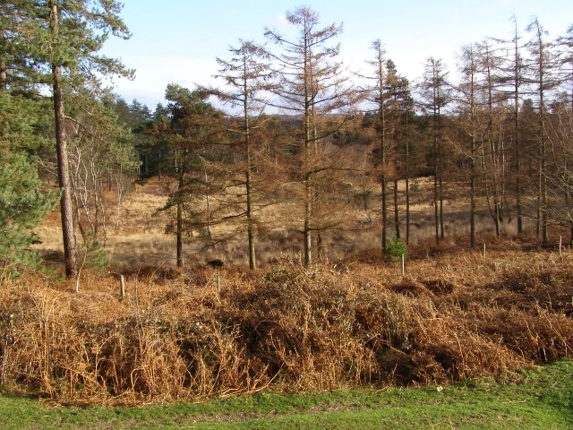 Coneygeer Bottom, New Forest