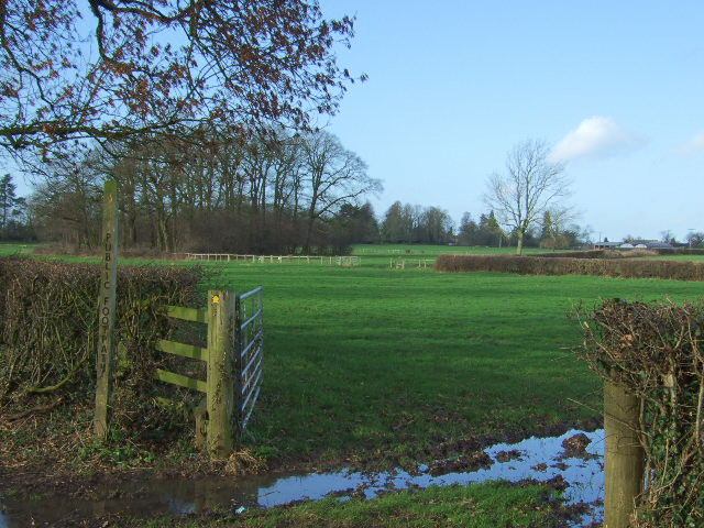 Footpath to the covert