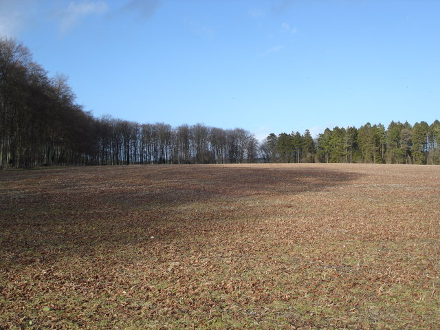 Tree Lined Field above Tollard Royal in January
