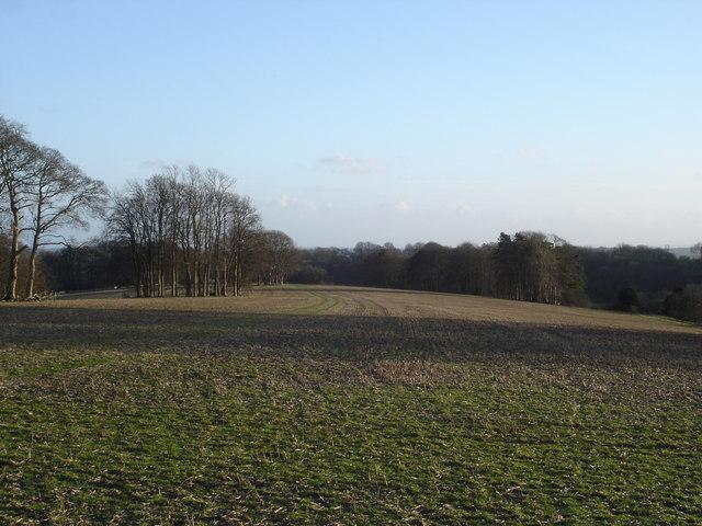 Farmland above Tollard Royal