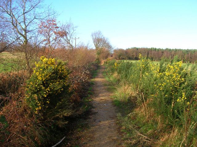 Public Byway to Limekiln Forest