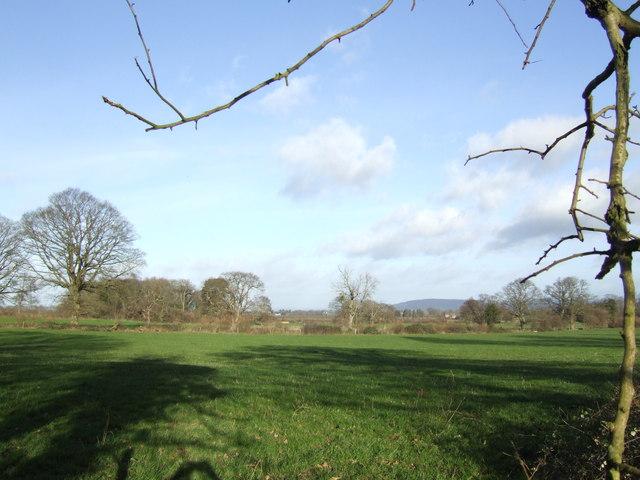 Pasture near Madley