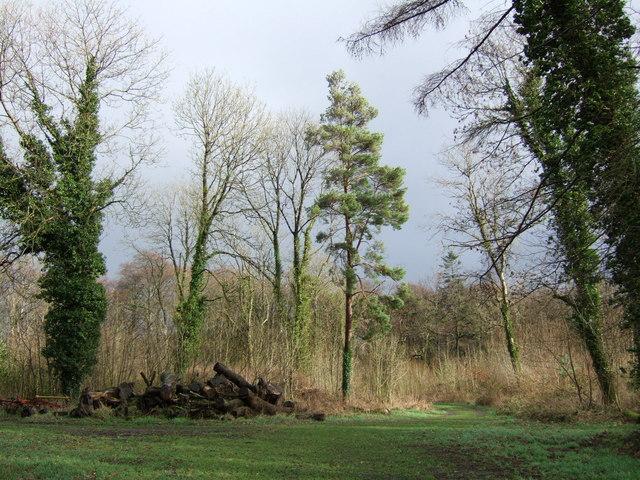 Woodland near Leamore House