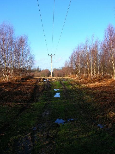 Power lines, Limekiln Forest