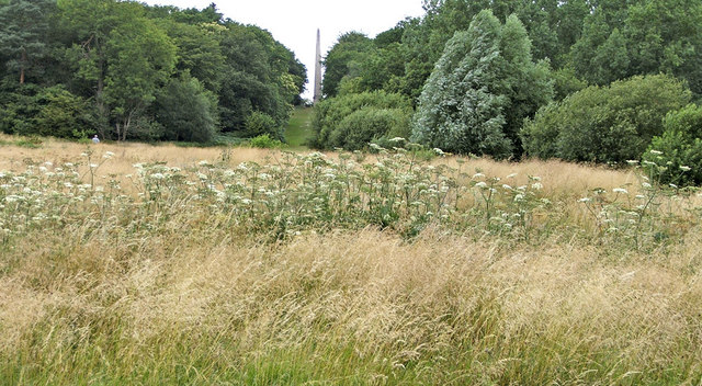 Uncut Field at Trent Park for wildlife, London, N14