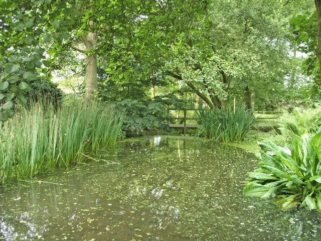 Lake in Japanese Garden, Trent Park, N14