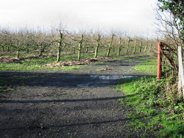 Orchard entrance and footpath.