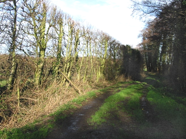 Bridleway from Sheerwater road.