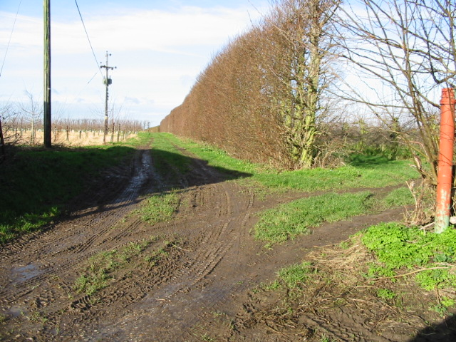 Footpath along orchard boundary, Overland Lane.