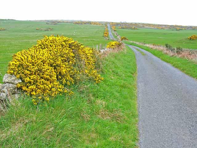Road across Craigoch Park Moor