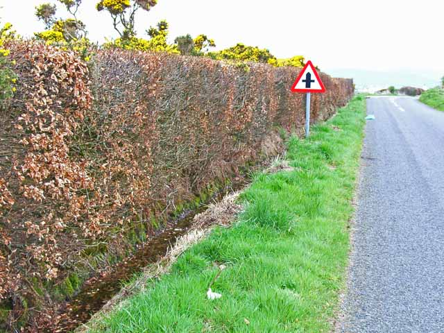 Beech hedge near Port of Spittal