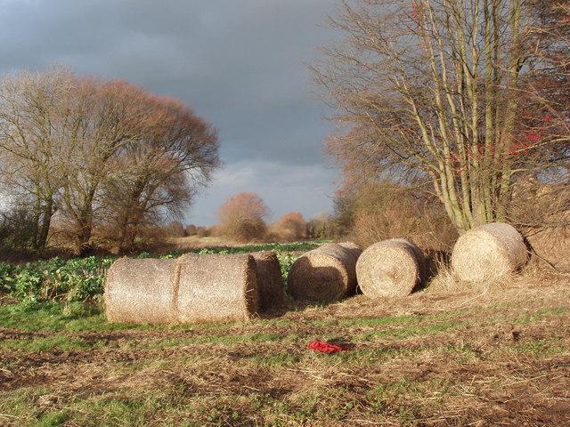 Straw Bales near Junction of Wheels Lane and Seg Lane, near Newland, North Yorkshire