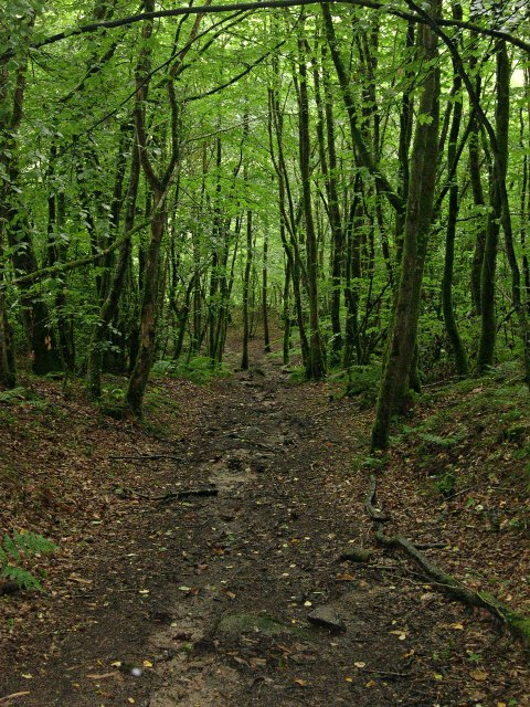 Down through Clitters Woods