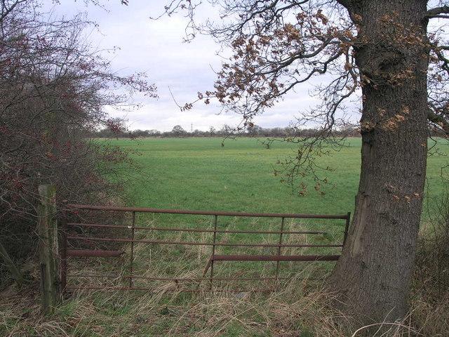 Oak Gate Post