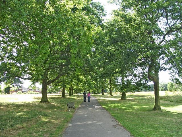 Scarlet Oak avenue in Oakwood Park, N14
