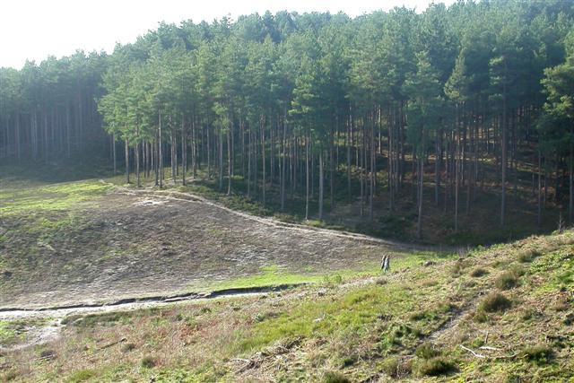 Bourne Wood